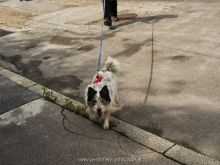 personensuchhunde training27